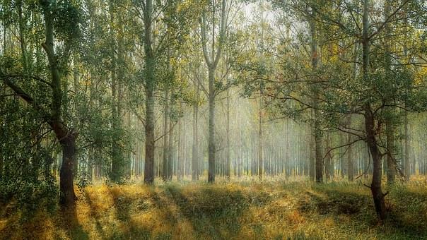 body_forest-1.jpg