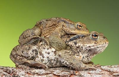 body_frogs-1.jpg