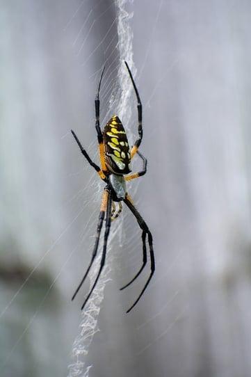 body_gardenspiderweb