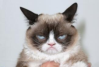 if your teachers face looks like grumpy cats when you ask for a recommendation letter she might not write you the best one