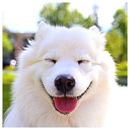 body_happy_puppy