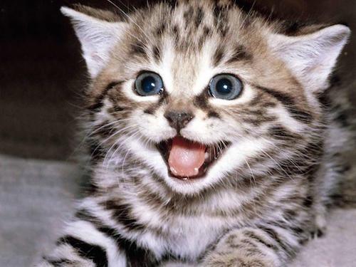 body_happycat