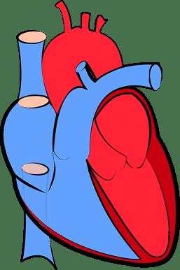 body_heart