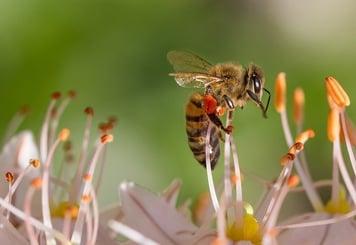 body_honeybee