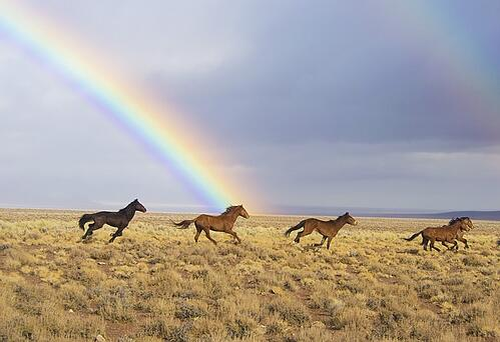 body_horses_rainbow