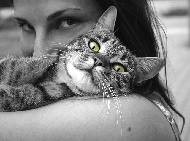 body_hug_cat.jpg