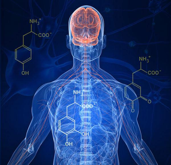 body_ibchemmedicine.jpg