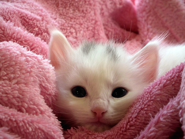 body_kitten.jpg