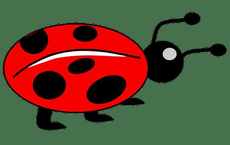 body_ladybug