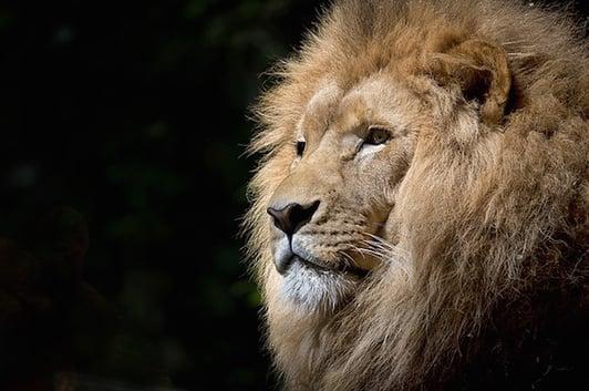 body_lion.jpg
