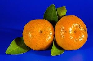 body_mandarinoranges.jpg