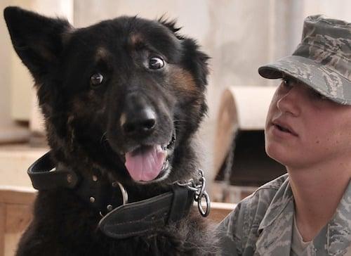 body_militarydog