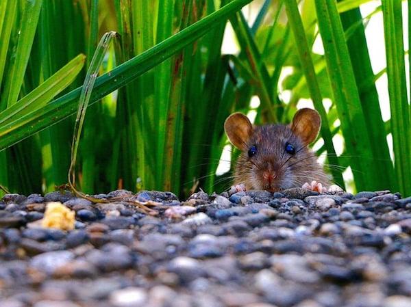 body_mouse.jpg