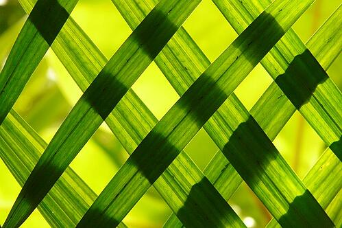 body_nature_leaves_pattern