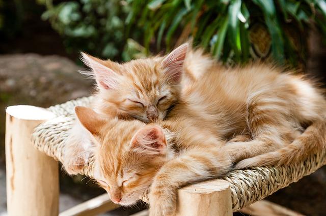 body_orange_kittens.jpg
