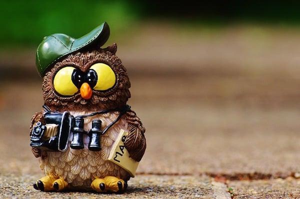 body_owl-1.jpg
