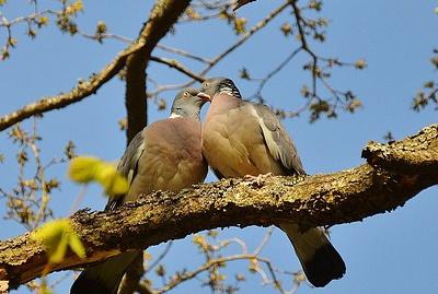 body_pigeons-1.jpg
