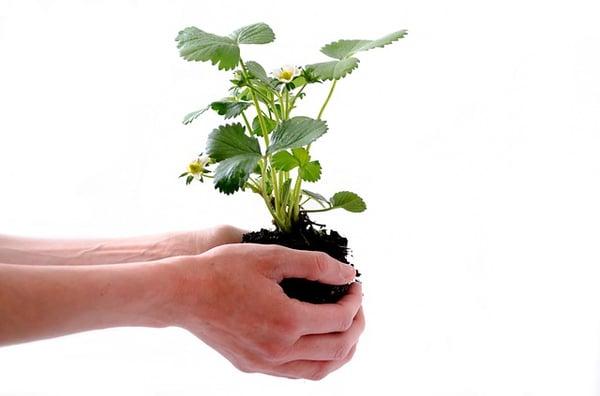 body_plant