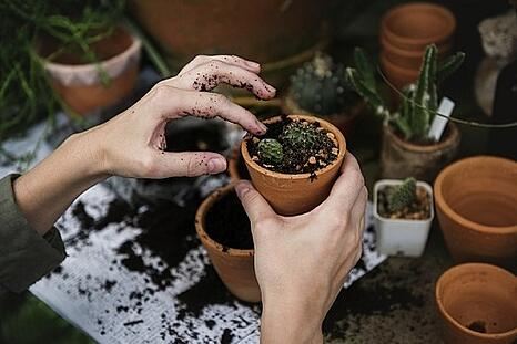 body_plants.jpg