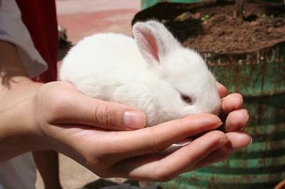 body_rabbit.jpg