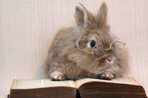 body_rabbitstudying.jpg