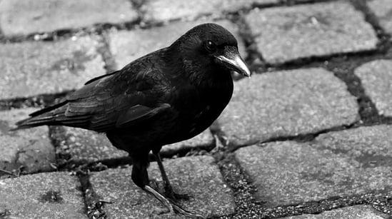 body_raven