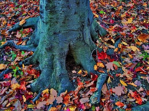 body_roots.jpg