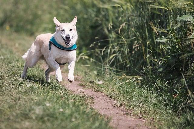 body_runningdog.jpg