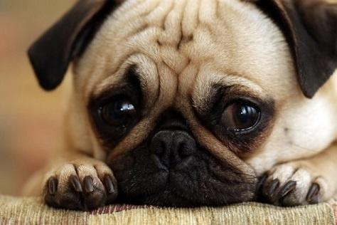 body_saddog.jpg