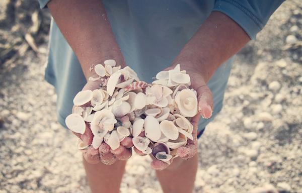 body_sea_shells.png
