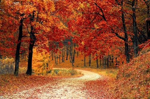 body_season_autumn.jpg