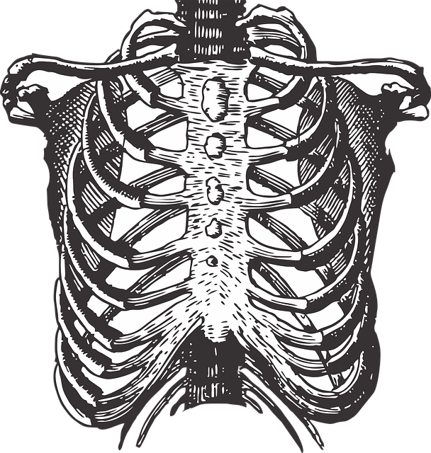 body_skeleton