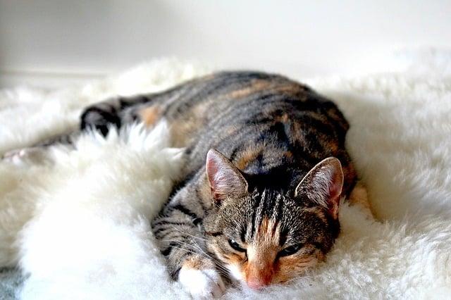 body_sleepy_cat