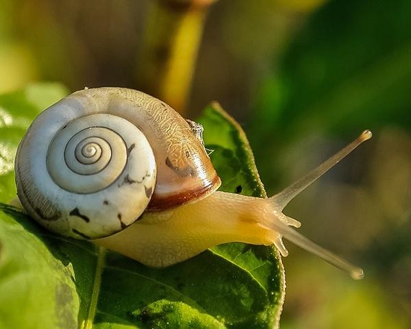 body_snail-2.jpg
