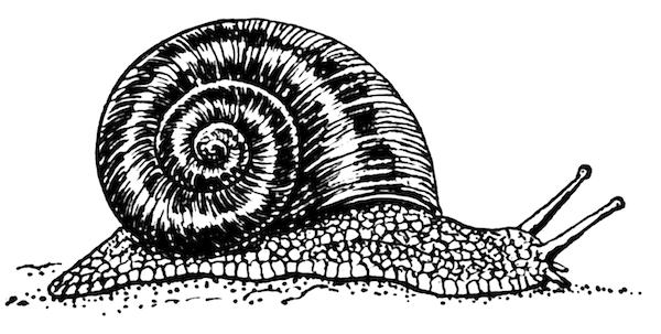 body_snail