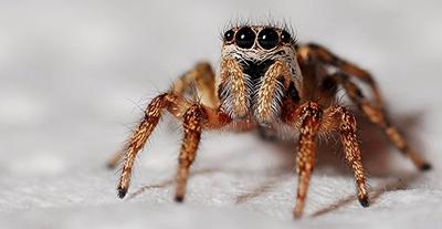 body_spider.jpg