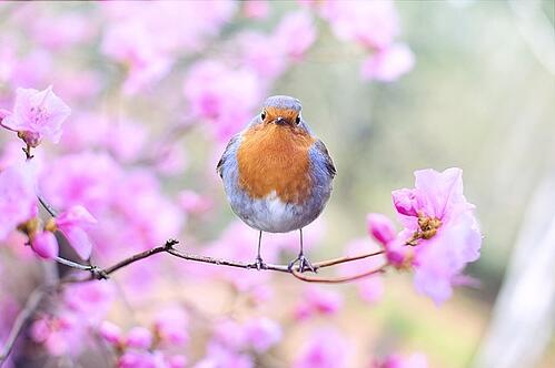 body_spring_bird_flowers
