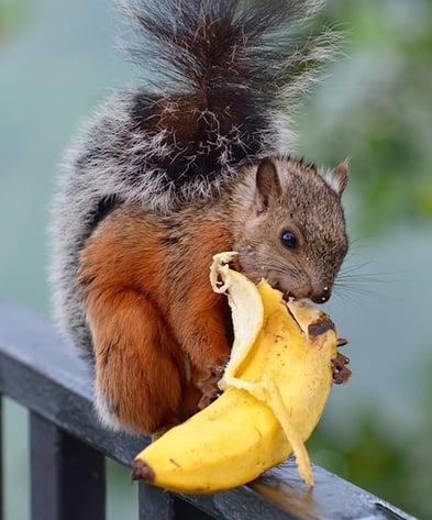 body_squirrel-2.jpg