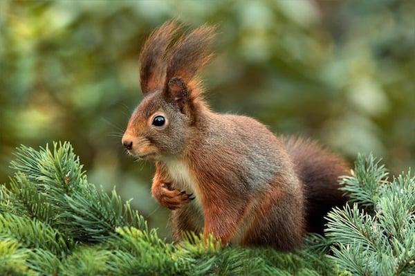 body_squirrel-3.jpg