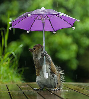 body_squirrelwithumbrella.jpg