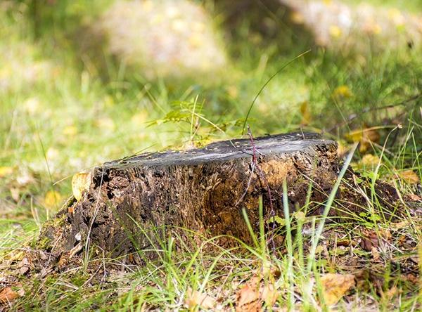 body_stump.jpg