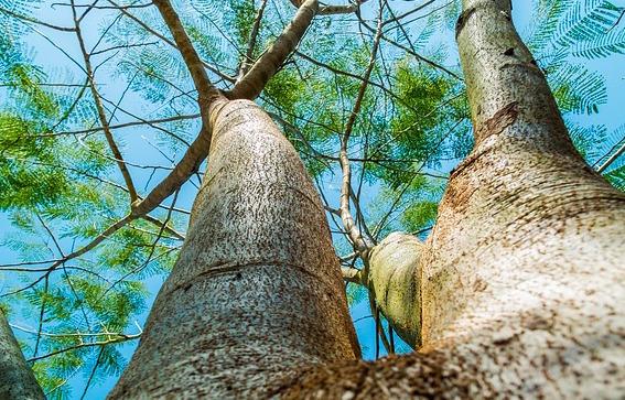body_tree.jpg