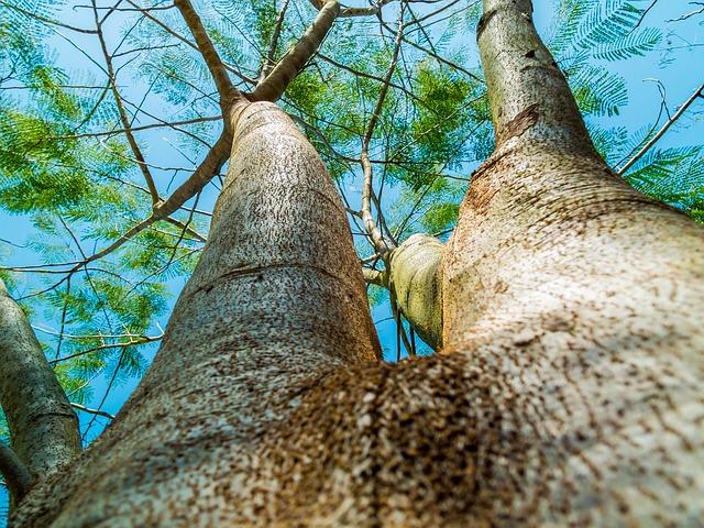 body_treebranching.jpg