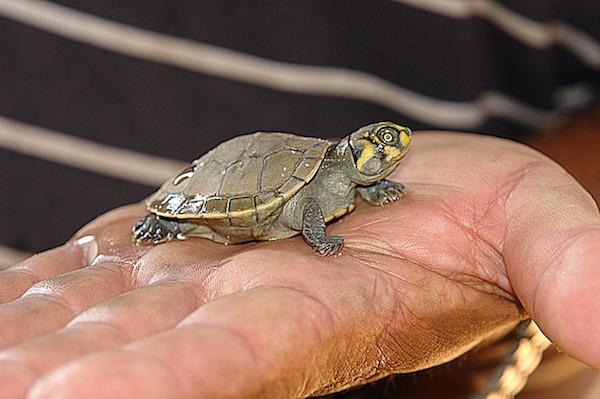 body_turtle.jpg