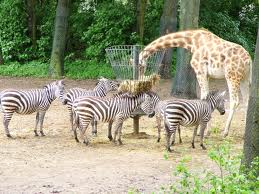 body_zebras.jpg