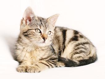 cat-1192026_640.jpg