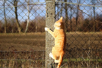 cat-1196297_640.jpg