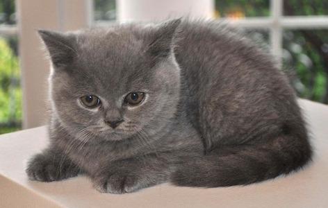 cat-1248019_640-1.jpg