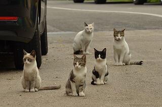cat-1543541_640.jpg