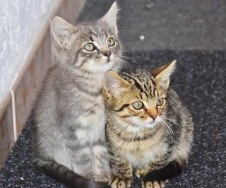 cat-1690258_1920.jpg